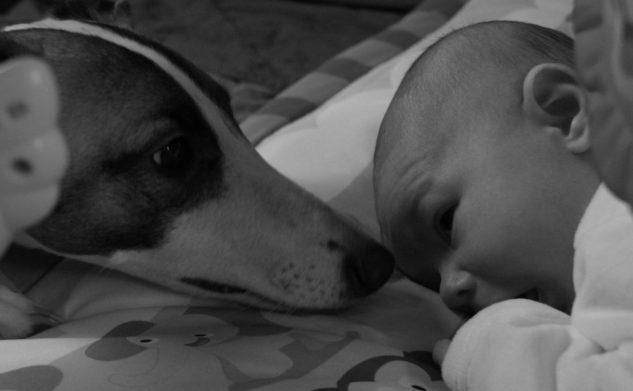 Zwierzęta a niemowlę. Co zrobić żeby pupil nie zjadł Twojej pociechy.