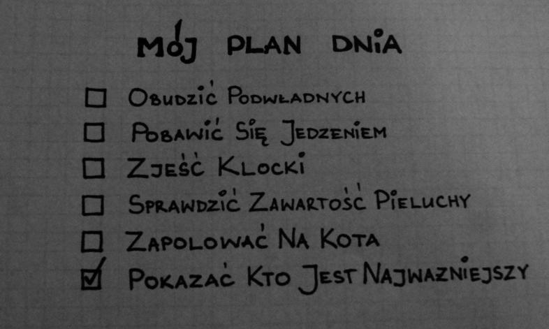 Plan dnia roczniaka
