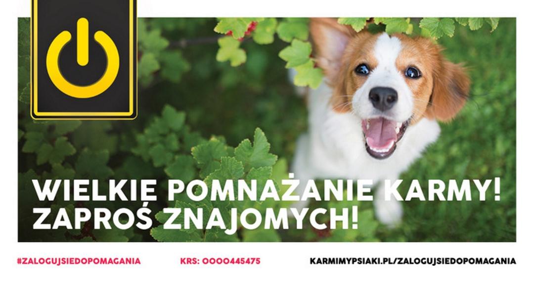 #ZalogujSieDoPomagania: razem możemy karmić psiaki!