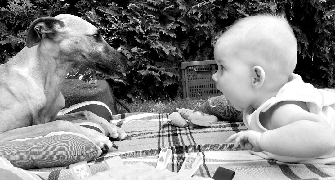 Jak traktować psa, żeby nie czuł się odrzucony, po narodzinach dziecka.